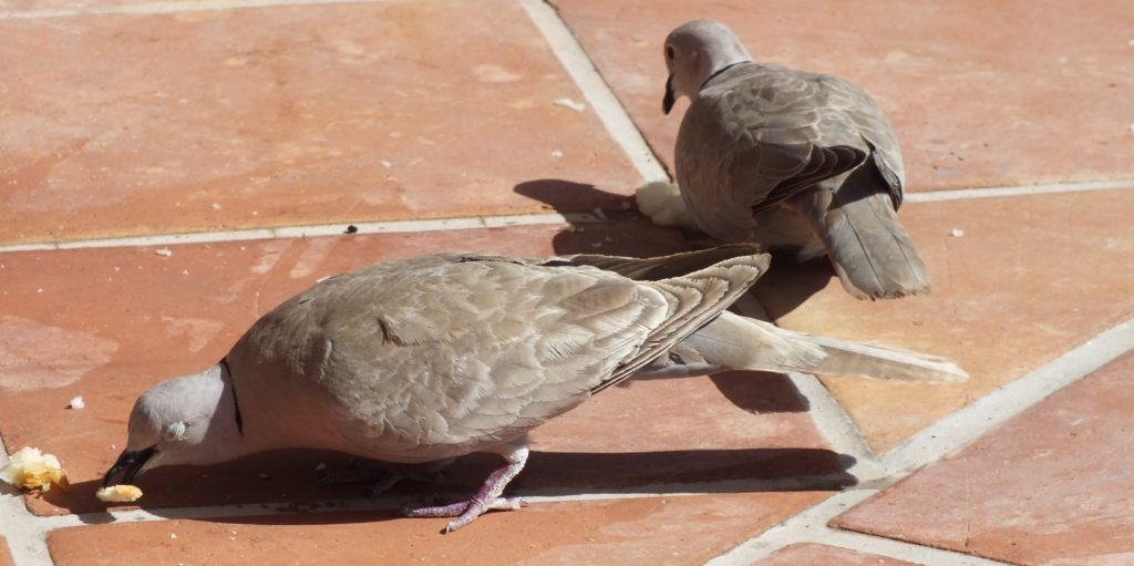 antipalomas control aves urbanas valladolid