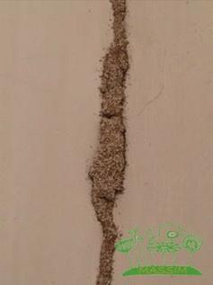 Control plagas termitas Massim