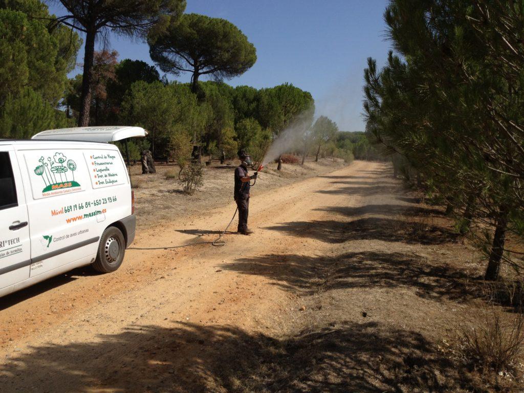 Massim tratamiento procesionaria del pino.