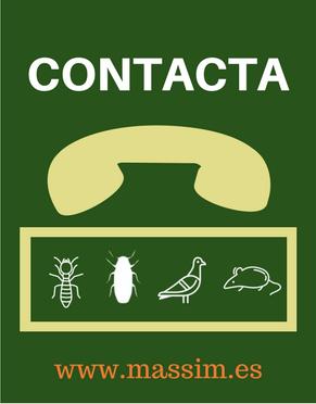 contacto control plagas massim
