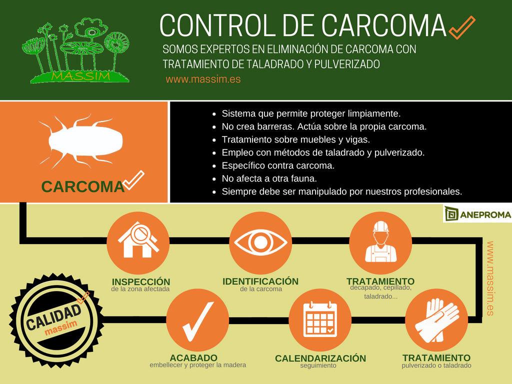 control plagas carcoma massim