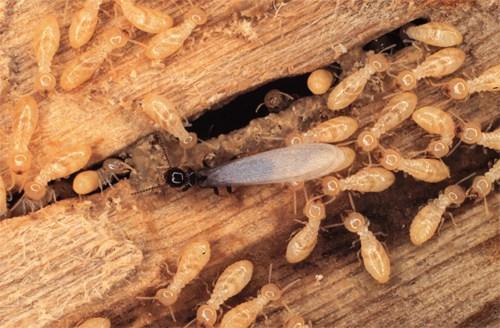tratamiento contra termitas Valladolid
