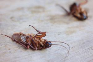 eliminar cucarachas valladolid