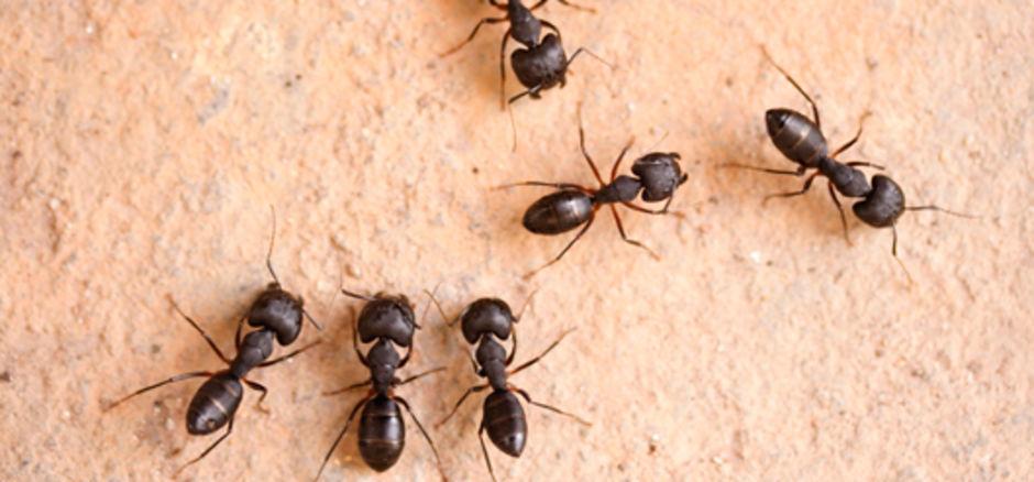 eliminar hormigas casa Massim Valladolid