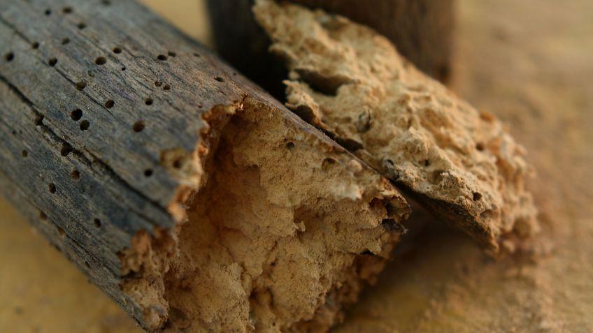 tratamientos para carcoma de la madera