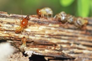 eliminar termitas tratamientos madera valladolid
