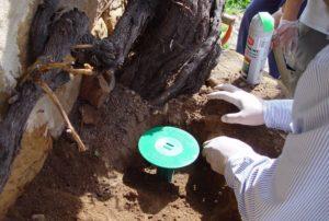 tratamientos contra termitas cebos massim