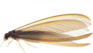 termitas voladoras valladolid burgos león salamanca zamora palencia soria ávila