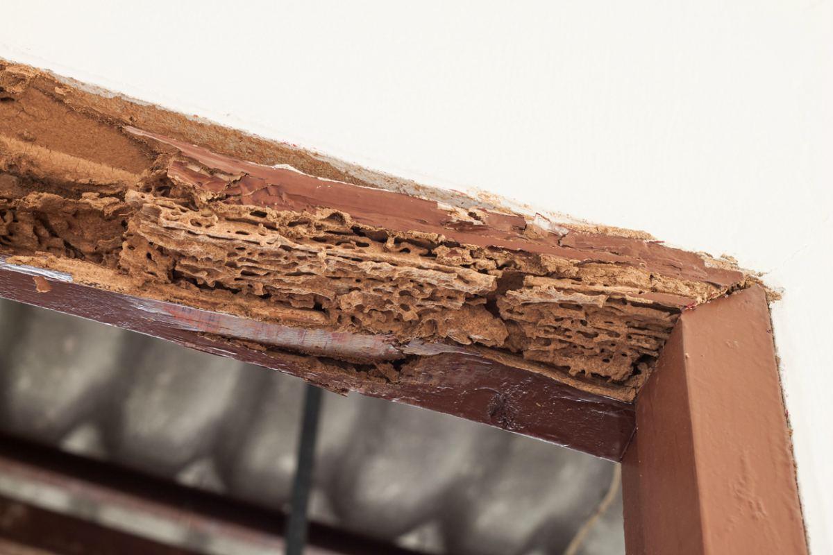 eliminar plaga termitas MASSIM Valladolid