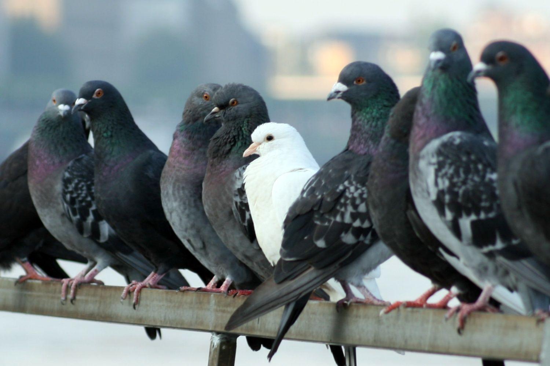 control aves urbanas massim valladolid