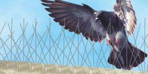 protección contra palomas valladolid MASSIM