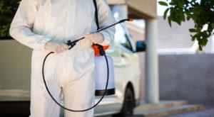 desinfección y control de plagas en Valladolid