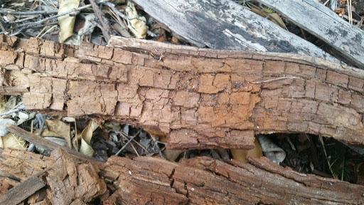 hongos de pudrición en madera Valladolid